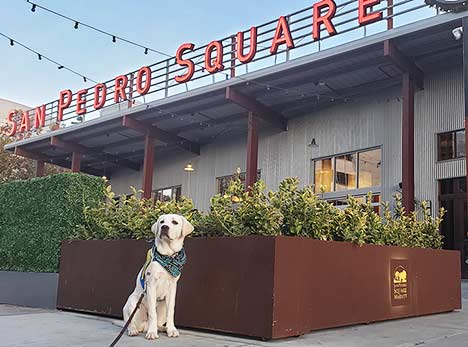 Sharks pup Finn underneath the San Pedro Square Market sign